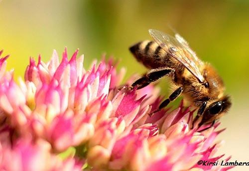 hunaja kauneushoitola